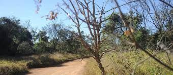 Em 2014, projeto passou a ofertar as visitas abertas à comunidade, que têm o intuito de levar pessoas a conhecerem o Cerrado da UFSCar - Crédito: Divulgação