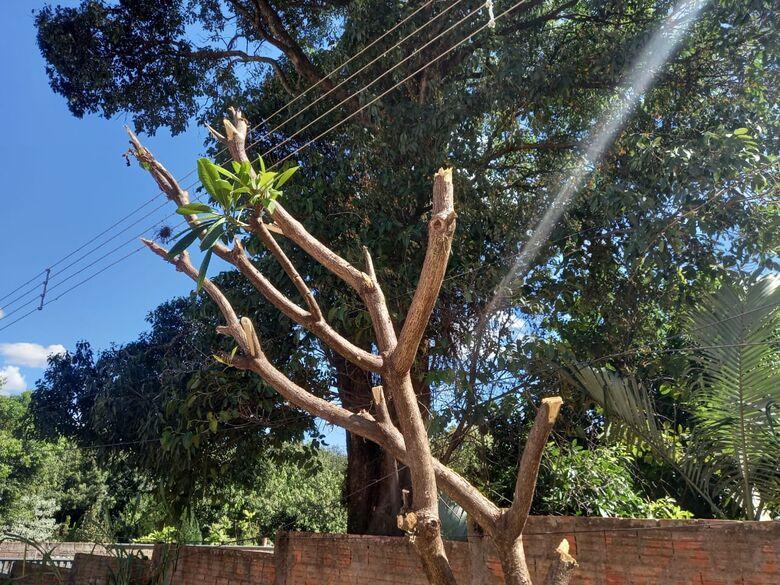 Homem recebe advertência da Polícia Ambiental após poda de árvore -