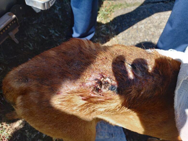 Mulher é detida por maus-tratos a cachorro em Ibaté -