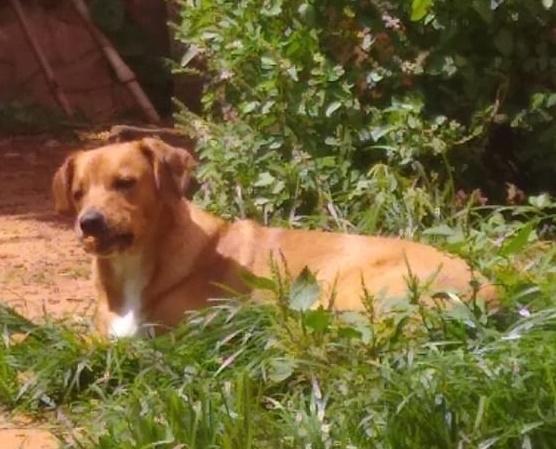 Pipoca desapareceu no Jardim Pacaembu. Ajude a encontrá-lo -