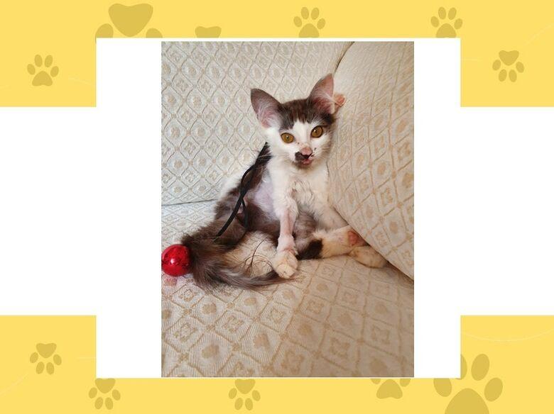 Homenagem da Funerais Pet a gatinha Lilith -