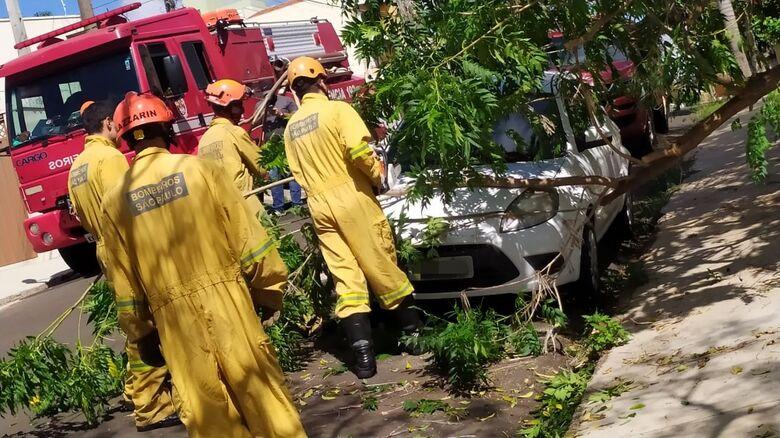 Queda do galho causou pequenos danos no veículo - Crédito: Maycon Maximino
