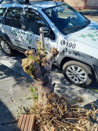 Moradora do Douradinho recebe advertência após podar árvore desnecessariamente -