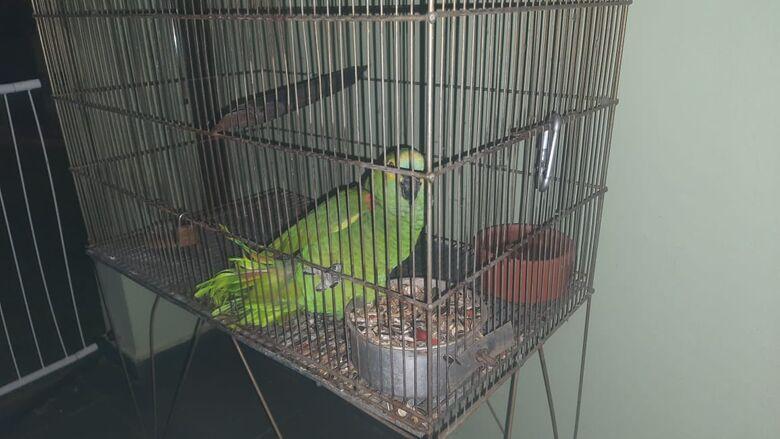 Por estarem domesticadas, as aves permaneceram com a proprietária - Crédito: Divulgação