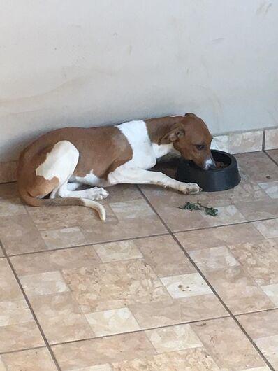 Homenagem da Funerais Pet à cachorrinha Liza -
