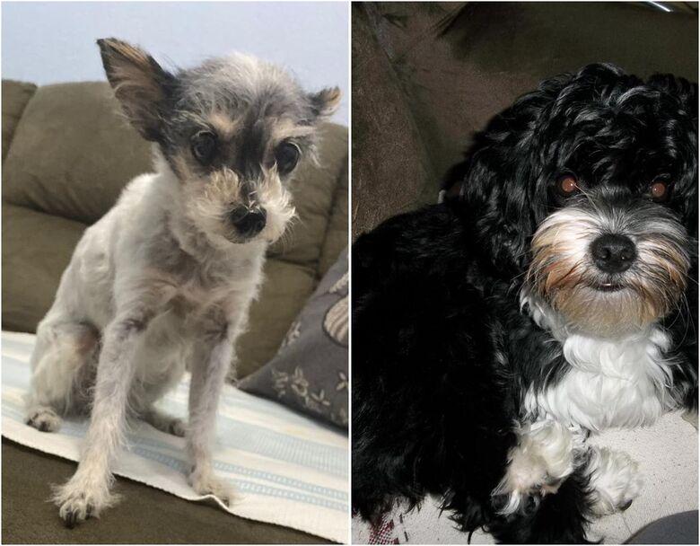 Homenagem da Funerária Santa Cruz às cachorrinhas Jully e Lola -
