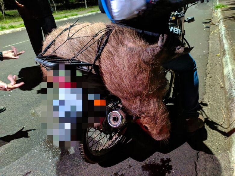 Motogirl fica ferida após atropelar capivara - Crédito: Maycon Maximino