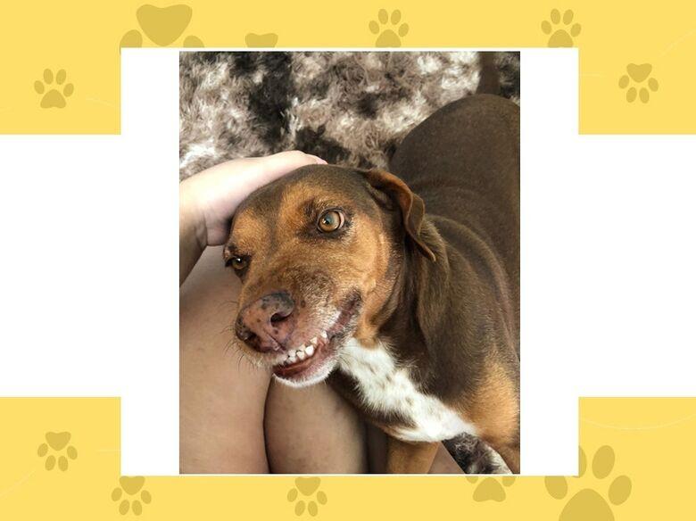 Homenagem da Funerais Pet a cachorrinha Ursinha -