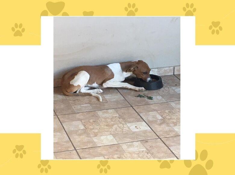 Homenagem da Funerais Pet a cachorrinha Liza -