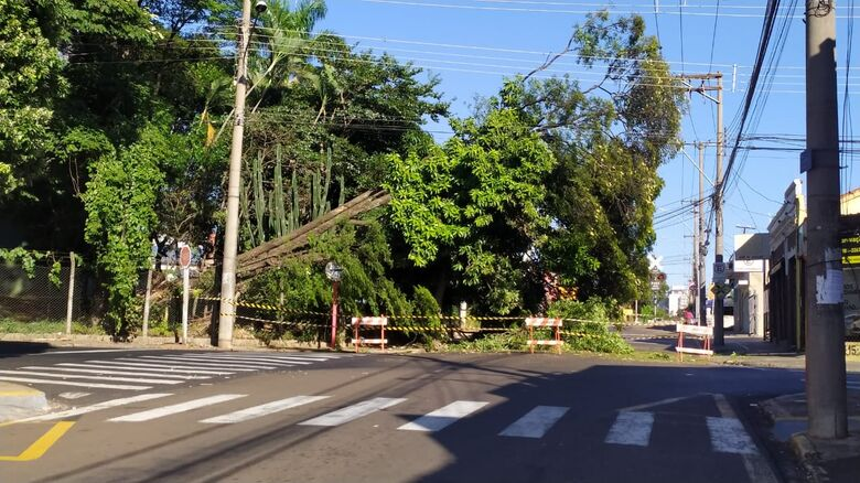 Árvore de grande porte caiu no centro de São Carlos - Crédito: Maycon Maximino