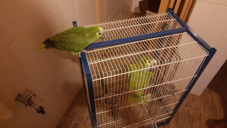 Papagaios estavam presos em gaiola e homem foi multado em R$ 1 mil - Crédito: Divulgação