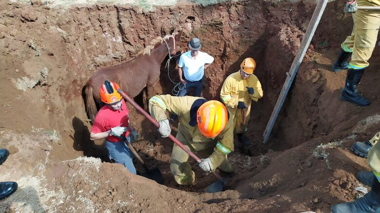 Bombeiros salvam mula que caiu em buraco no Romeu Tortorelli - Crédito: Maycon Maximino