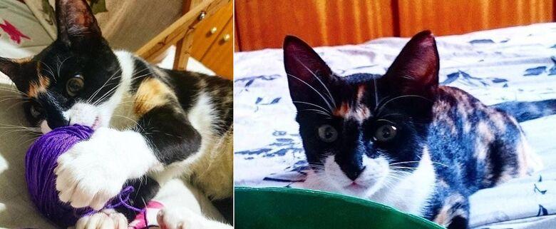 Gatinha Nala desapareceu em Itirapina. Ajude a encontrá-la -