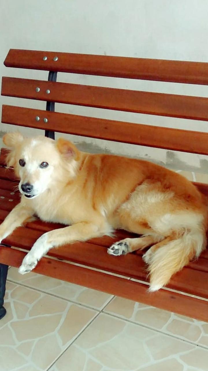 Homenagem da Funerais Pet ao cachorro Charlie -