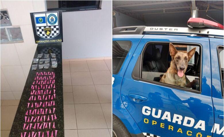 Canil da GM apreende drogas em terreno no São Carlos 5 - Crédito: divulgação/GCM