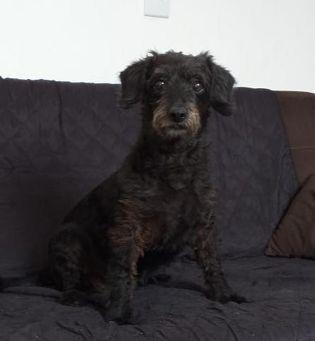 Homenagem da Funerais Pet a cachorrinha Luna -