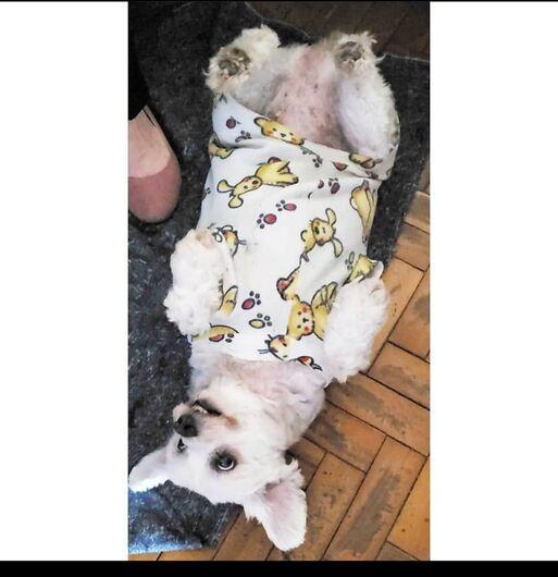Homenagem da Funerais Pet a cachorrinha Pandora -