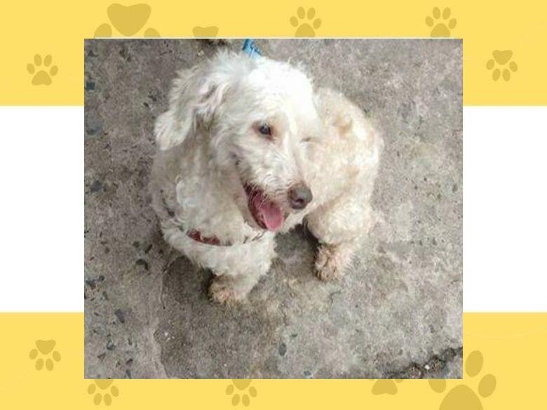 Homenagem da Funerais Pet ao cachorrinho Saydi -
