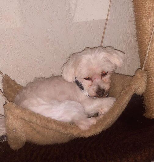 Homenagem da Funerais Pet ao cachorrinho Nick -