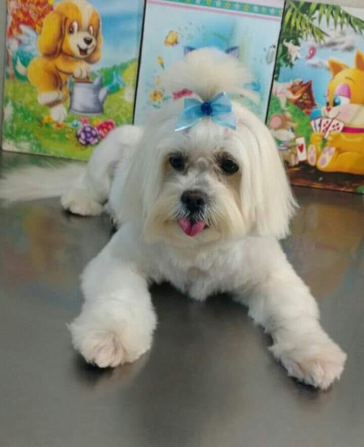 Homenagem da Funerais Pet à cachorrinha Tina -
