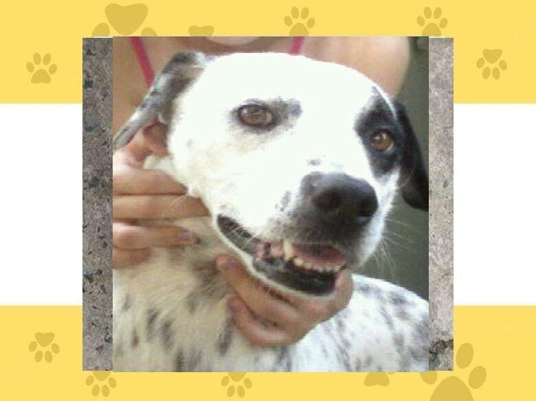 Homenagem da Funerais Pet a cachorrinha Tusca -
