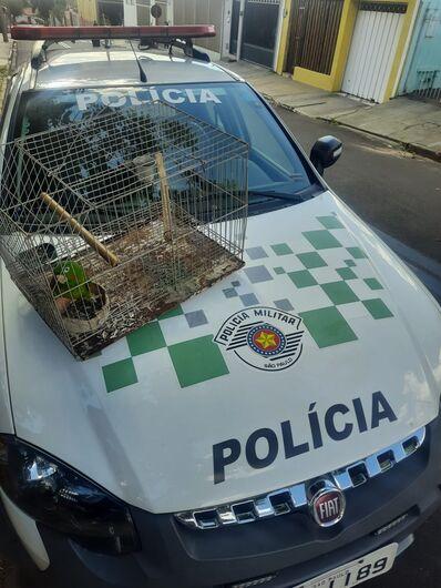 Maritaca estava presa em gaiola - Crédito: Divulgação