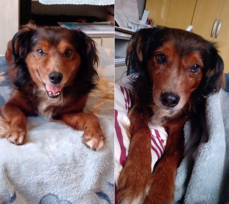 Cachorro Tody desapareceu no Centro. Ajude a encontrá-lo -