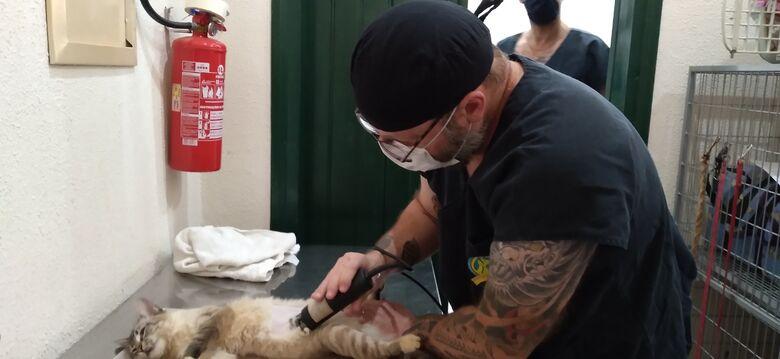 Castração de cães e gatos será retomada - Crédito: divulgação