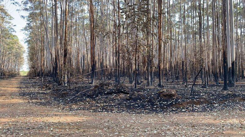 Cerrado da UFSCar foi castigado pelo incêndio: fauna e flora foram seriamente atingidos - Crédito: Márcio David