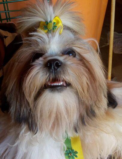 Homenagem da Funerais Pet ao cachorrinho Tião -