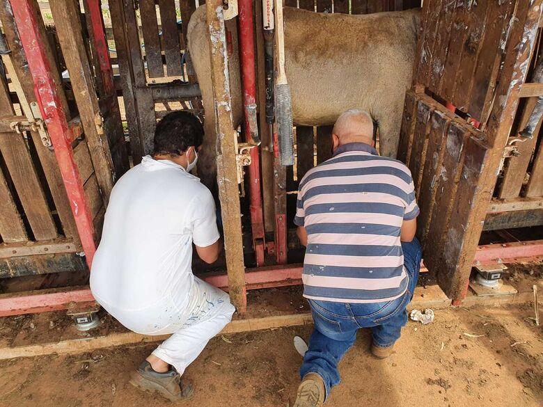 Veterinários cuidam dos animais que foram salvos durante a queimada que causou grandes danos à Embrapa - Crédito: Juliana Sussai e Gisele Rosso