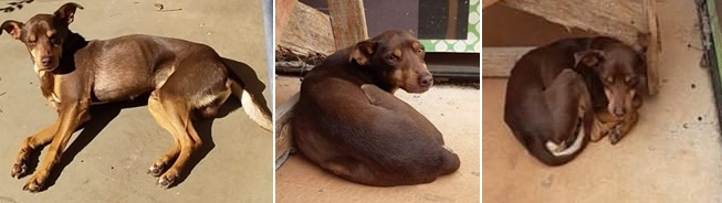Cachorro Tobby está desaparecido. Ajude a encontrá-lo -
