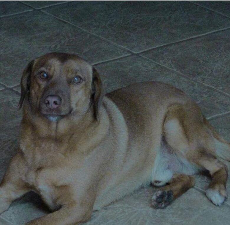 Homenagem da Funerais Pet ao cachorrinho Ozzy -