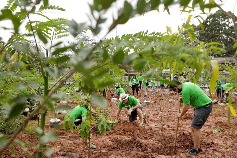 Objetivo é homenagear pessoas significativas por meio do plantio de árvores - Crédito: Divulgação