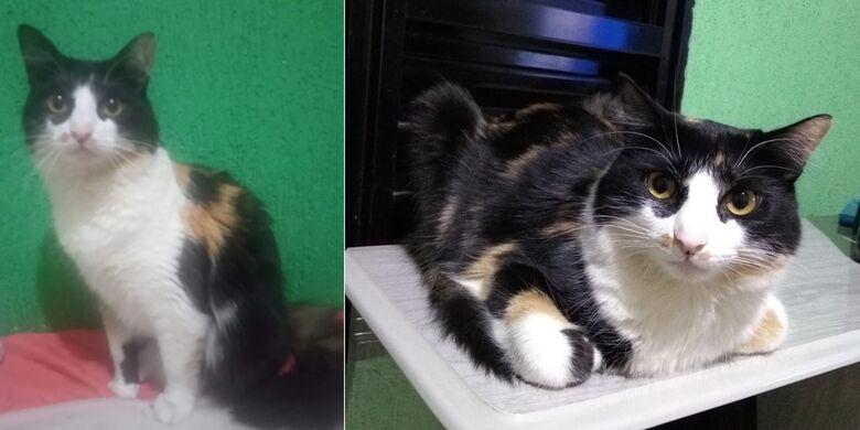 Gatinha Chiclete desaparece no Aracy 2 -