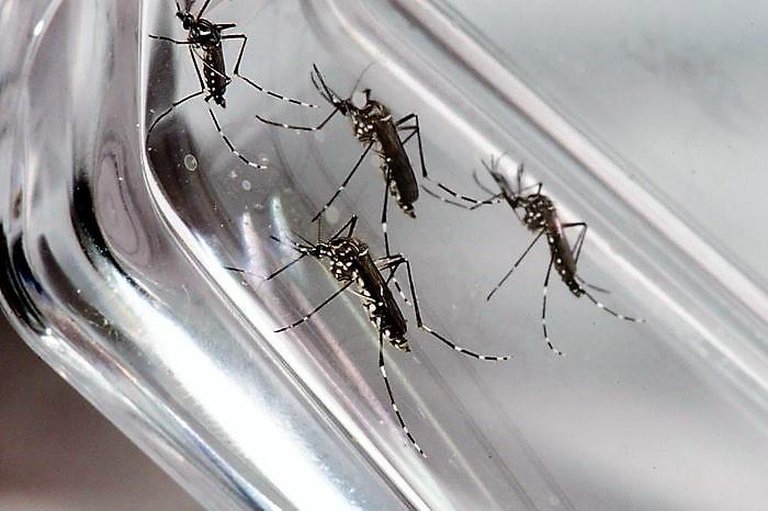 Equipe de combate às endemias realiza atividades de controle e eliminação de criadouros do mosquito Aedes Aegypti em São Carlos -