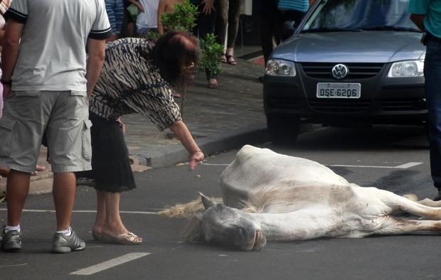 Cavalo não suportou e acabou falecendo nesta madrugada -