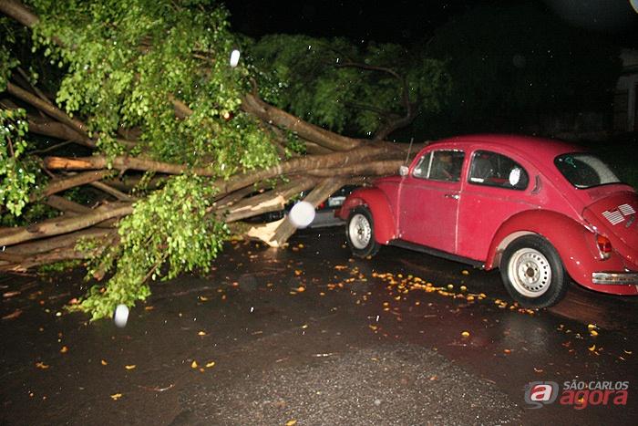 Cruzeiro do Sul: árvore caiu em cima de um carro e interrompeu fornecimento de energia -