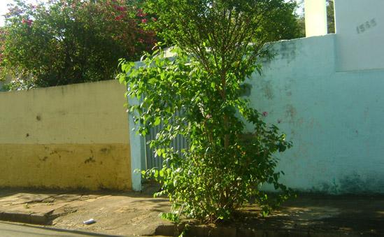 Casa no Centro de São Carlos abrigava carros furtados e roubados. -