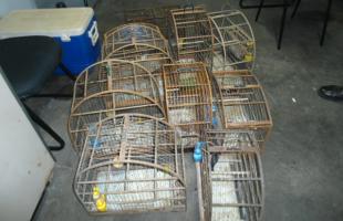 Gaiolas onde estavam os pássaros apreendidos (Foto: Polícia Ambiental/Divulgação) -