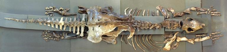 Fósseis do tatu gigante descoberto por pesquisadores da UFSCar. Foto: Luciana Fernandes -