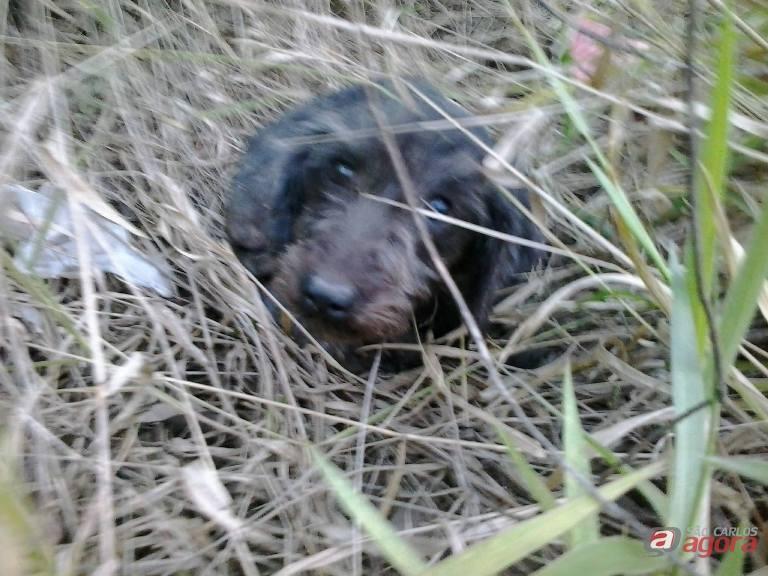 A pequena Cristal: abandonada em um terreno abandono no Embaré, foi salva por dois 'anjos de plantão'. Fotos: Divulgação -