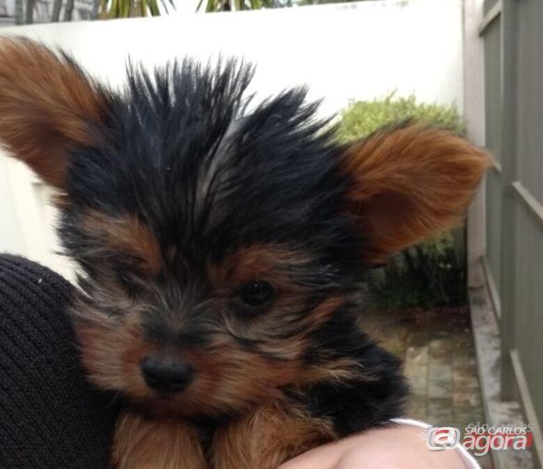Procura-se cãozinho que desapareceu na região do Kartódromo -