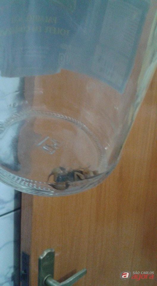 Moradora encontra escorpião dentro de casa no Santa Angelina -