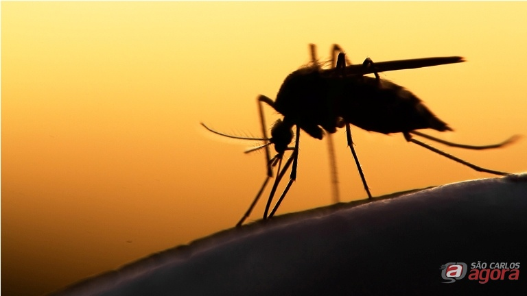 Mulher morre com suspeita de dengue em Araraquara -