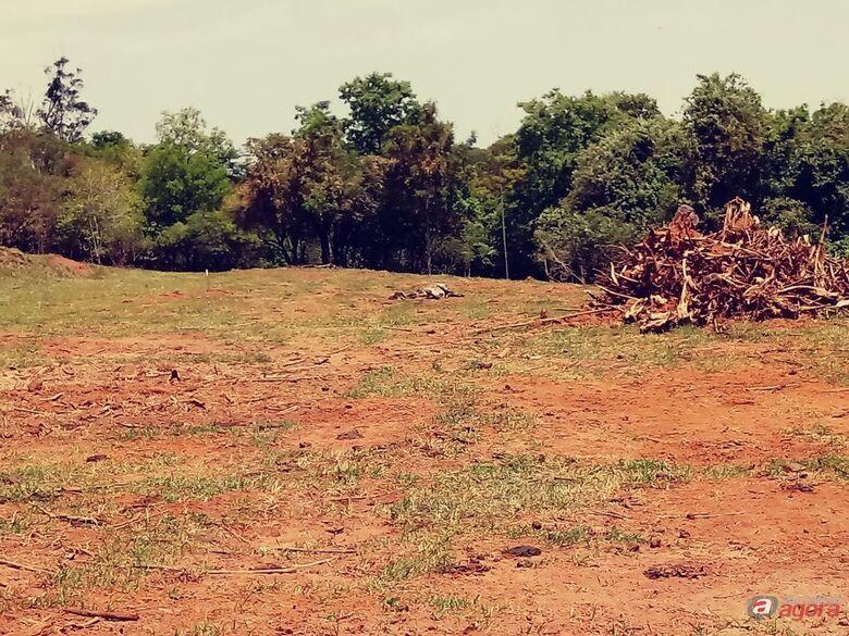 Vaca é encontrada agonizando em pasto onde égua precisou ser sacrificada -