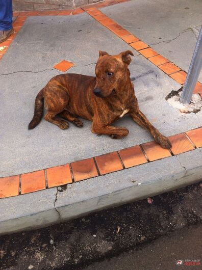 Cachorro está perdido na região da Santa Casa -