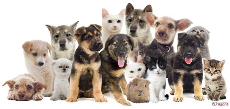 1º Pet Day acontece neste domingo em São Carlos -