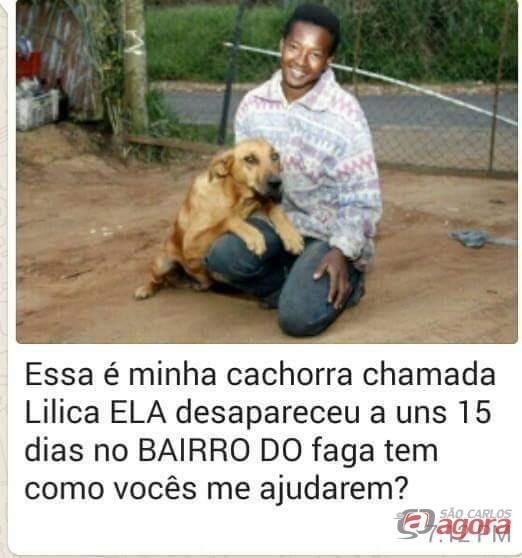 Lilica, a cachorra que leva comida aos seus companheiros está desaparecida -