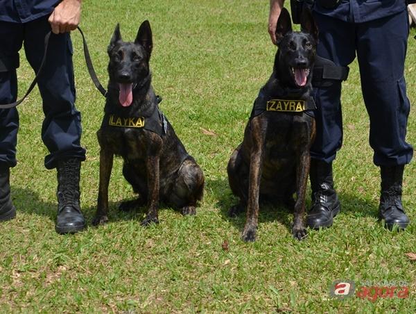 Guarda Municipal de São Carlos divulga relatório de atividades em 2017 -